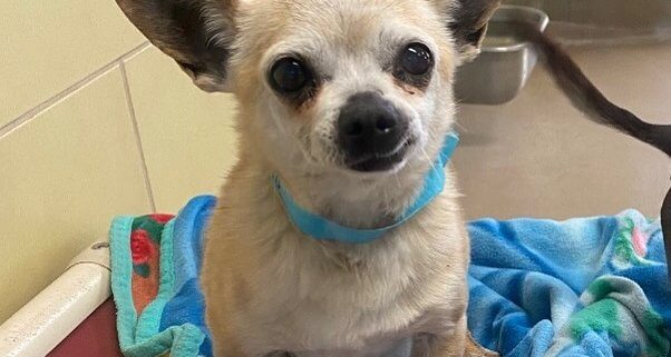 Toothless senior dog needs a home