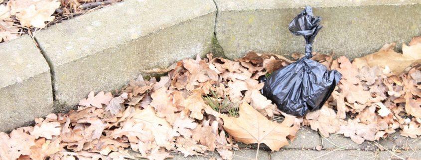 ailing dog placed in trash bag