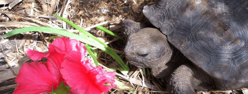 Turtles smuggled to China