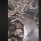teens face felony charges for kicking deer in the head