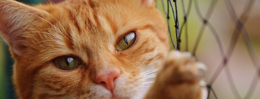USDA ends research on cats