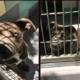 Good girl returned after free adoption event