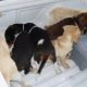 Prison time for veterinarian who smuggled heroin in puppies