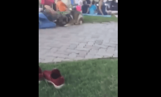 Police investigate after video shows man hitting dog