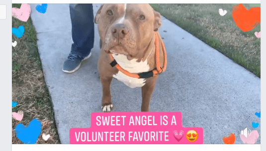 Volunteer favorite on list of dogs to be euthanized