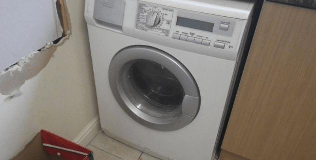 Teen killed cat in a washing machine