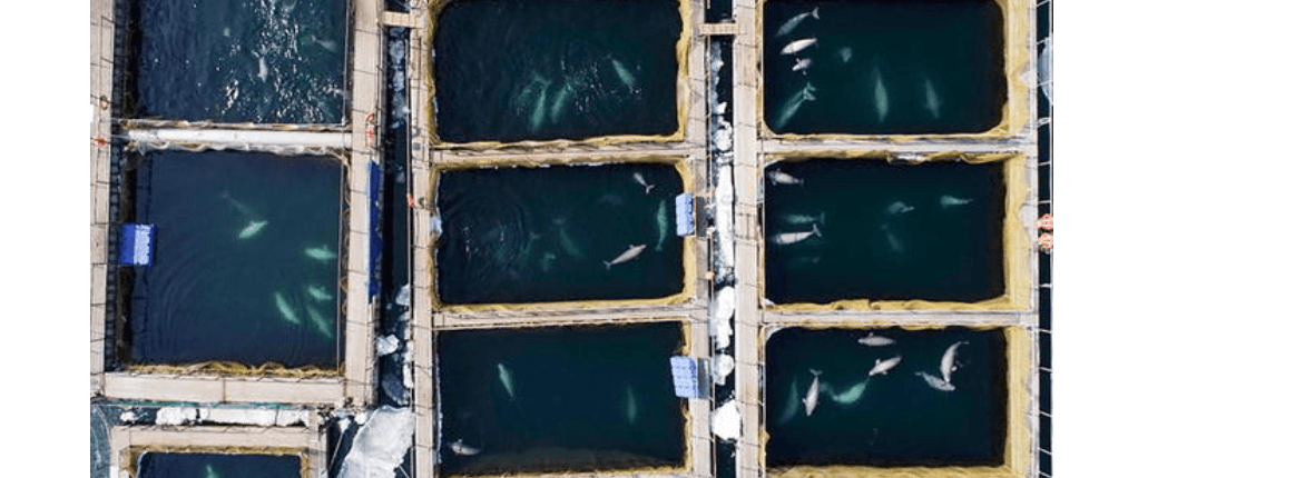 whales in watery prison