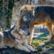 Wildlife park struggling financially during shut down