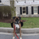 Winery dog makes deliveries
