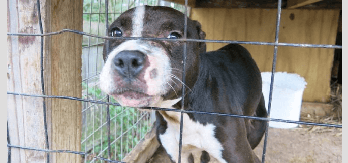Woman arrested on dog fighting charges