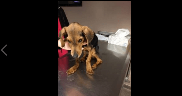 Woman arrested for dumping emaciated dog