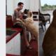 Woman dumped dog because boyfriend didn't like him