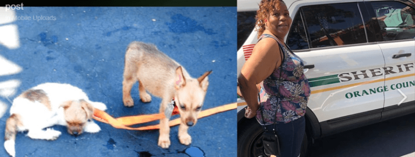 Woman arrested - two puppies died after being left in parked car