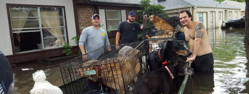 Woman refused to leave 21 dogs