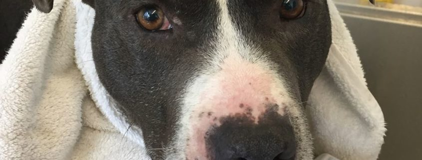 After a year at shelter, homeless dog's time is drawing to a close