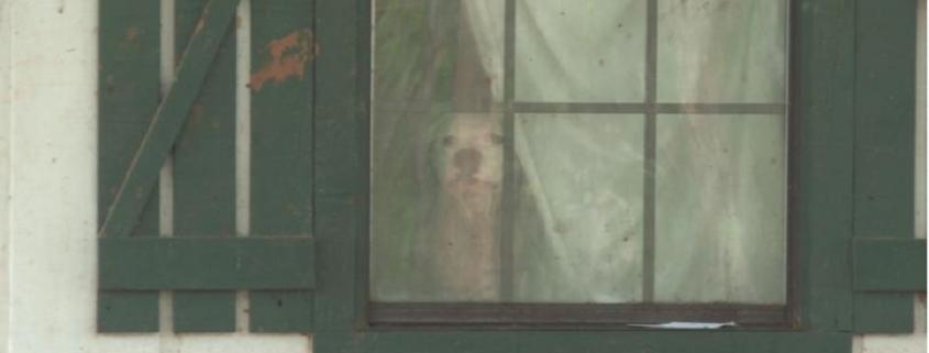 Family abandoned pit bull Zeus