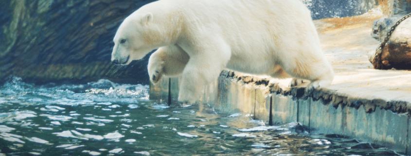 zoo announces death of elderly polar bear